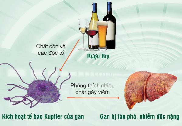 bia rượu hủy hoại gan
