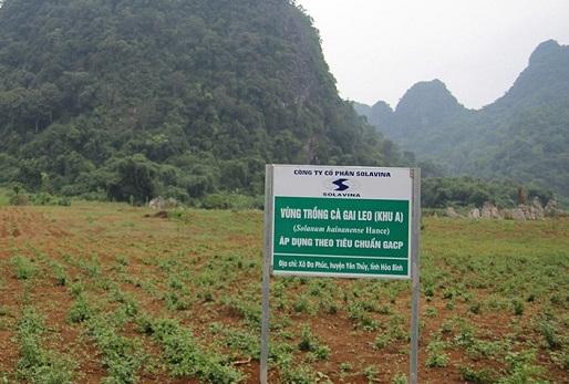 Nông trại cà gai leo đạt chuẩn GACP - WHO