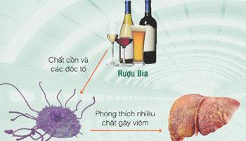 Bia rượu hủy loại lá gan của bạn như thế nào